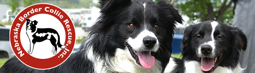 10 Reasons to Consider a Rescue Dog